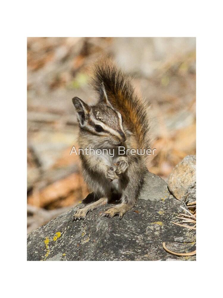 Hello chipmunk! by dailyanimals