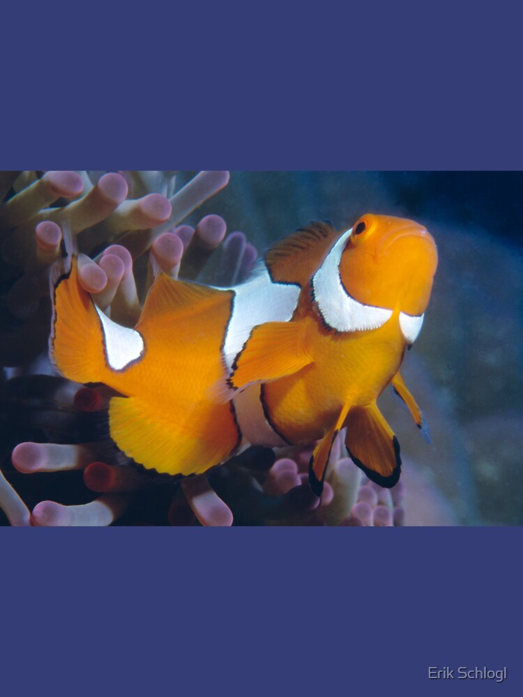 Clown Anemonefish by eschlogl