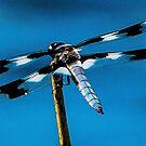 Bugs are Beautiful  by Richard Bozarth