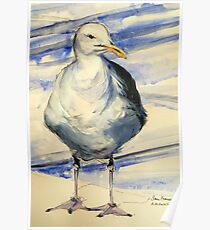 San Francisco seagull: pen and wash Poster
