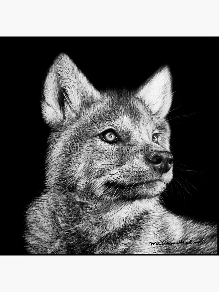 Wolf Pup Black and White Art by MHScratchboard
