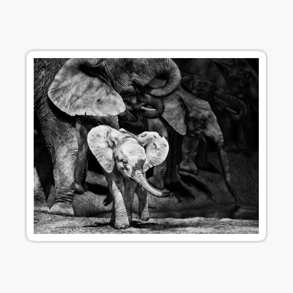 Baby African Elephant with Herd Sticker