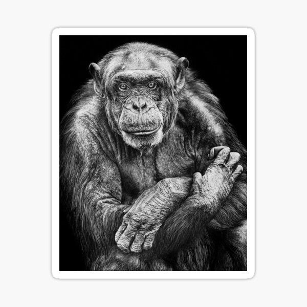 Chimpanzee Black and White Artwork Sticker