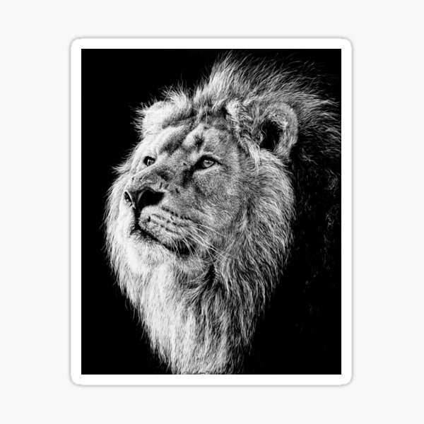 African Lion black and white art Sticker