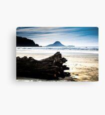 Drift wood on Ohope beach New Zealand Metal Print