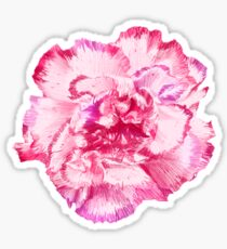 Carnation Coloured - Coral Sticker