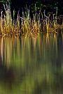 Blue Pool Reflections II by Adriana Glackin