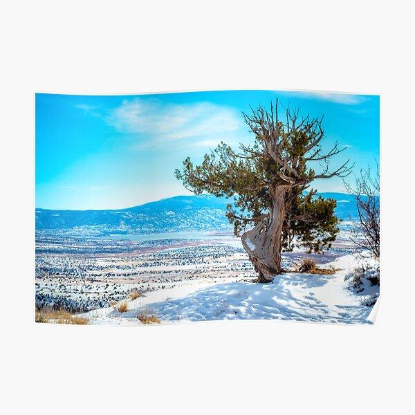 Snowy Deserts Poster