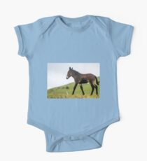 Foal grazes in a green meadow  Kids Clothes