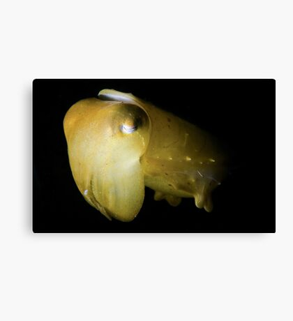 Snooted Cuttlefish Canvas Print