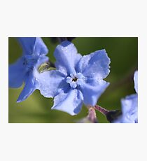 Blue For You Photographic Print