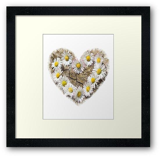 Daisy Flower Desing Romance by Albaley