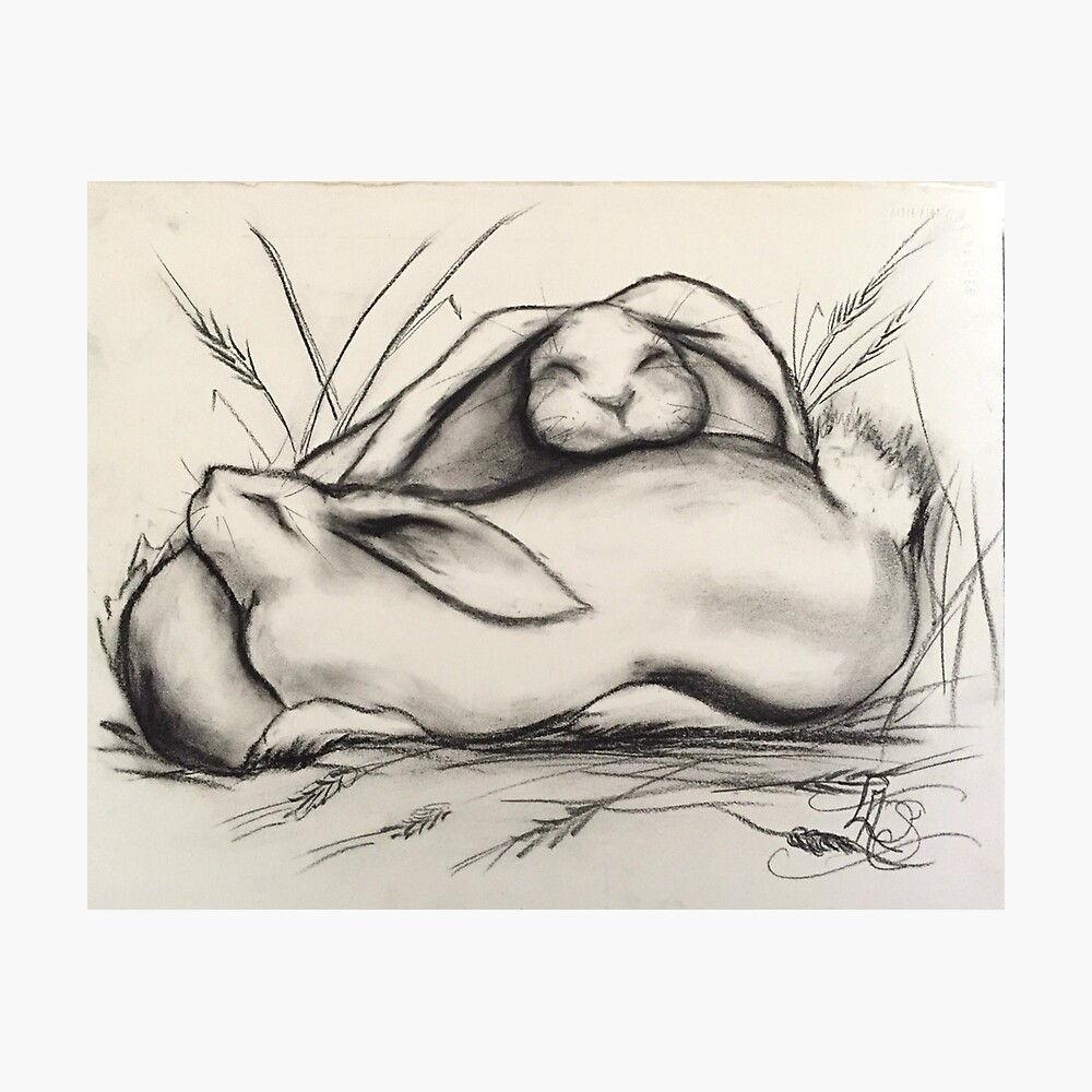 Sleeping Rabbits Photographic Print