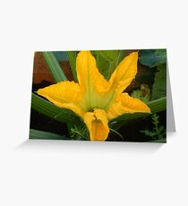 Zucchini Flower Greeting Card