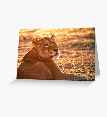 The Morning Glow Before The Hunt Greeting Card