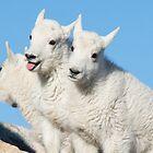 Three-headed Goat by Eivor Kuchta