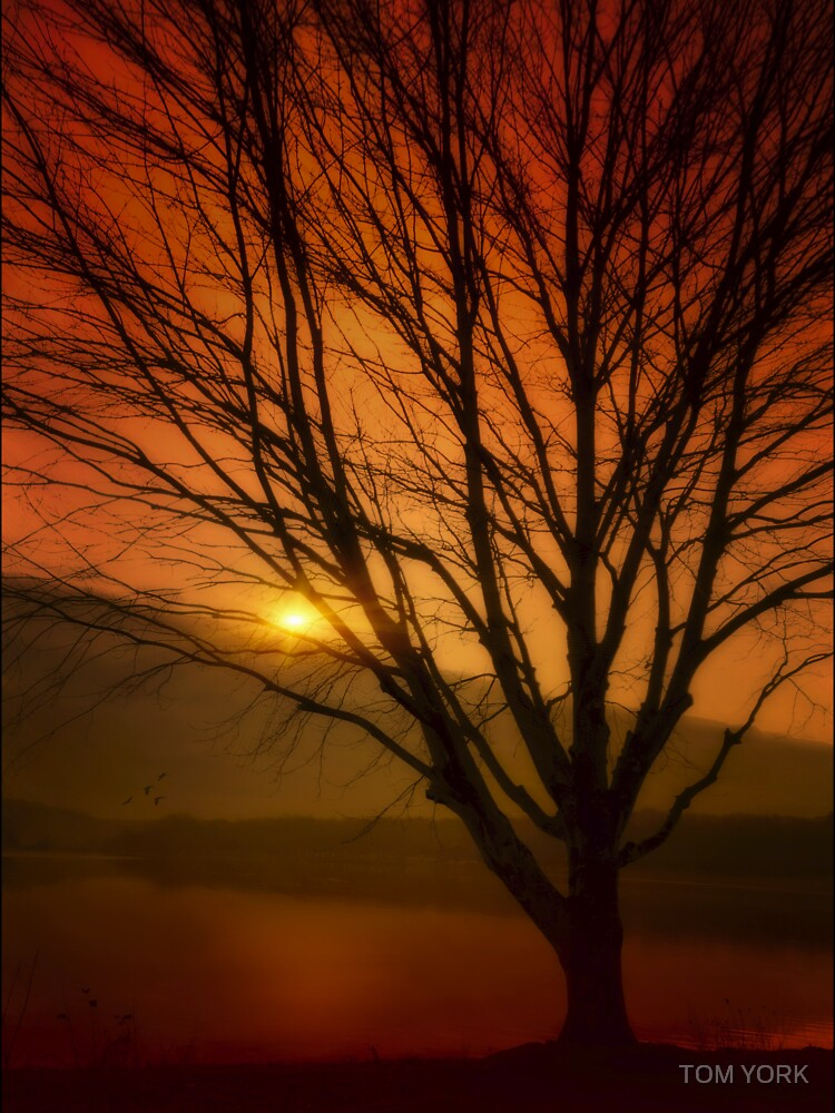 July Sunset by tekten67