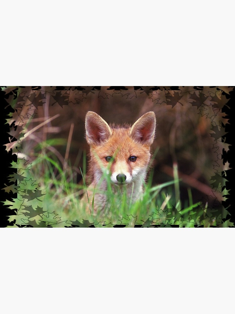 «jeune renard» par LustratPhilippe