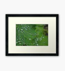 Water droplet leaf? Framed Print