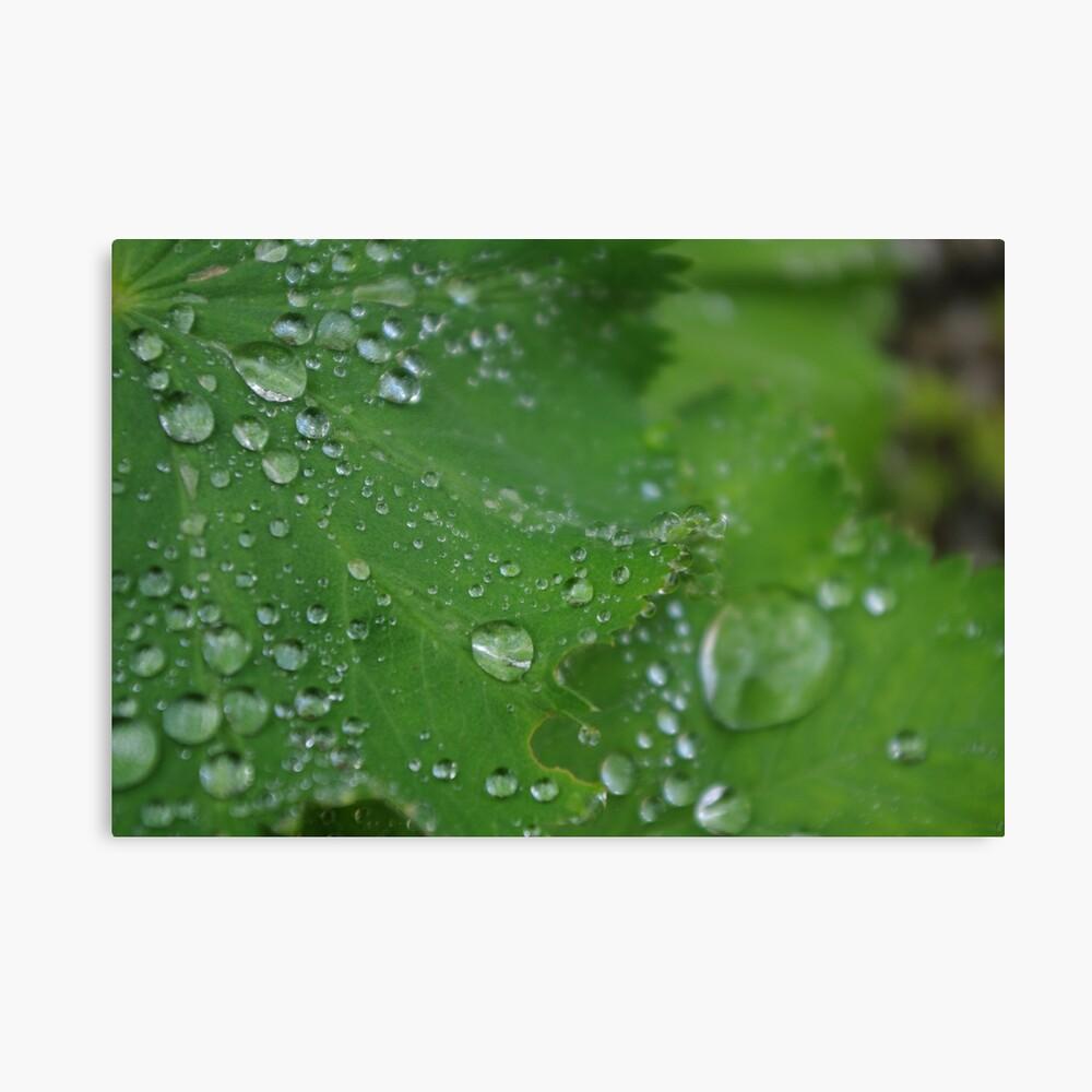 Wassertropfen Blatt? Leinwanddruck