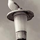 La Jolla Beach Seagull III by K D Graves Photography