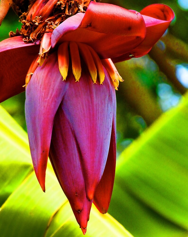 """Banana Flower Glow"" by Margaret Saheed"