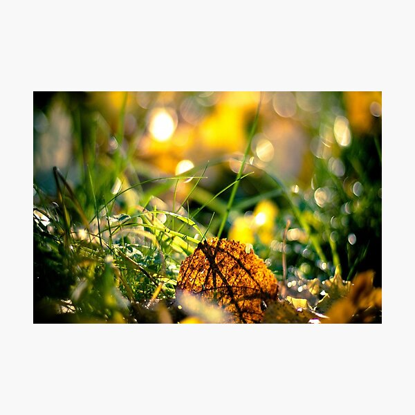 Best Image for Prints, Cards, Poster, Calender  Photographic Print
