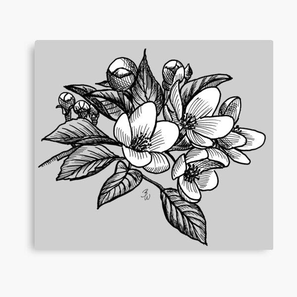 Blumen Design Kirschblüten – Tusche Zeichnung  Leinwanddruck