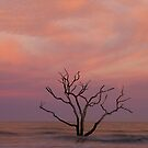 Sunset at Botany Bay by bcollie