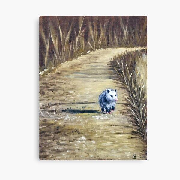 Tiny Lonely Possum Canvas Print