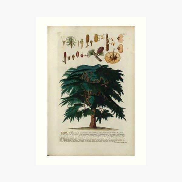 Cedar Tree Print Art Print
