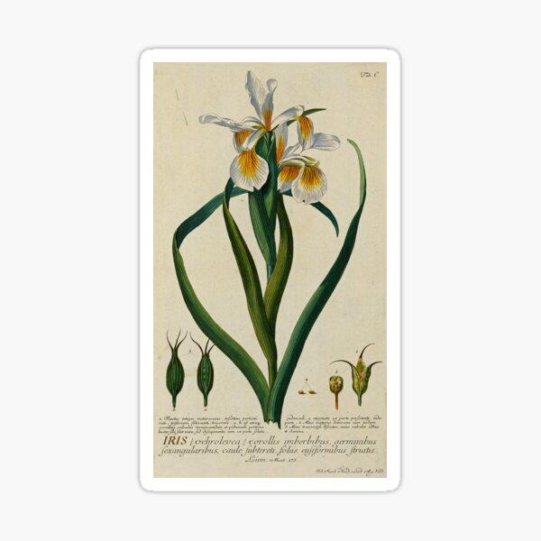 White Iris Print Sticker