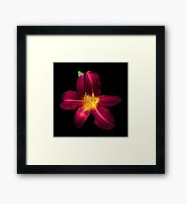 Red and Yellow and Pink and Green Framed Print
