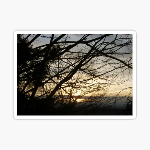 Branches at Sunset Sticker