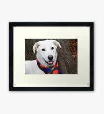 Bell Of The Ball  White Shepard Mix  Framed Print