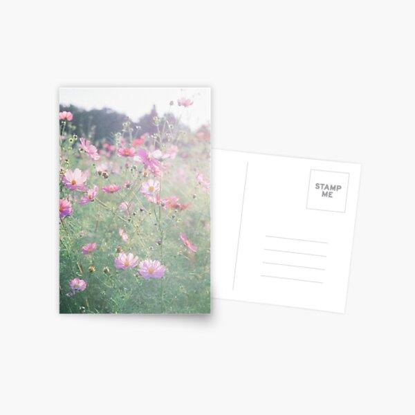 Cosmos - コスモス Postcard