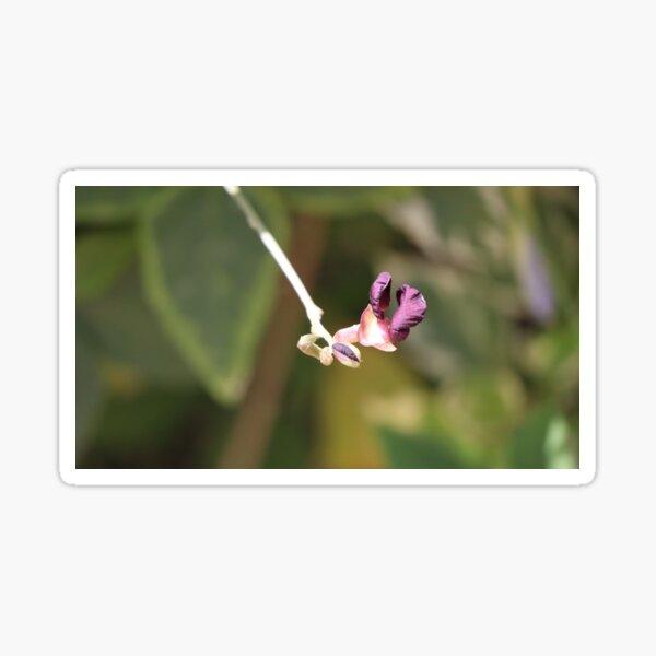 Purple beauty Sticker