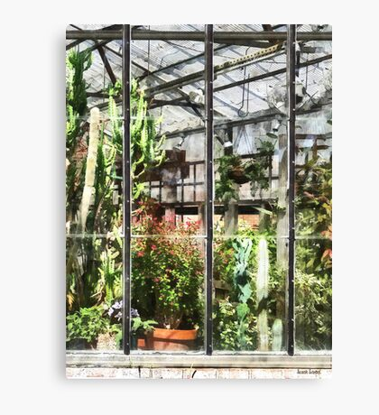 Greenhouse With Large Cactus Canvas Print
