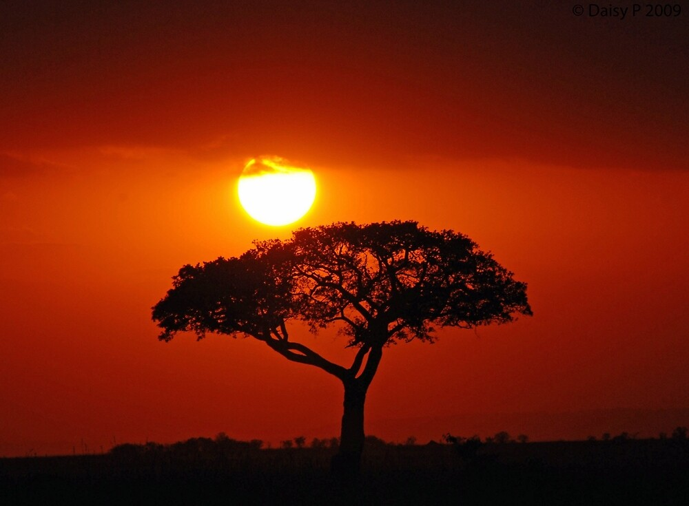 Quot African Sunset Quot By Daisymae Redbubble