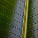 Elephant Ear Plant Abstract by Larry Costales