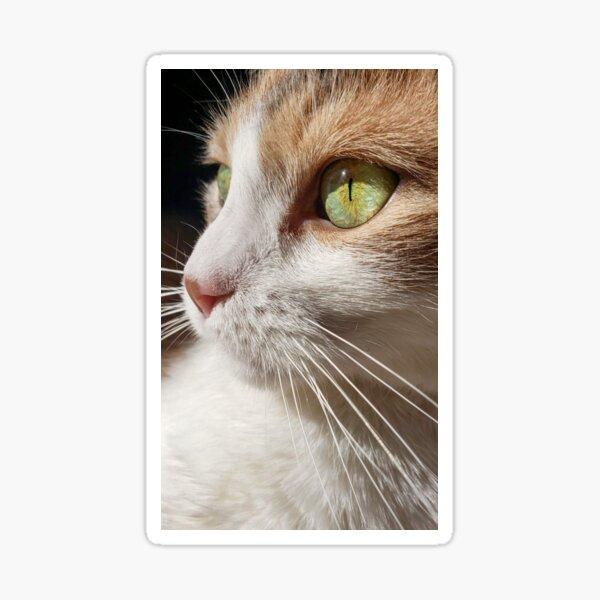 Calico Cat Closeup Sticker
