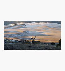 Buck In The Early AM  Photographic Print