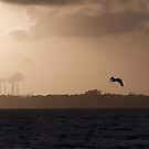Sunset Pelican by pmreed