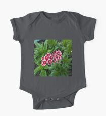 Sweet, Sweet Williams - Red Picotee Kids Clothes