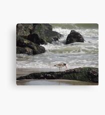Oyster catcher Low Tide Canvas Print