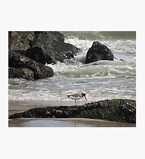 Oyster catcher Low Tide Photographic Print