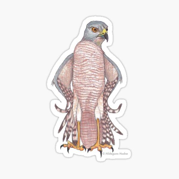 Brown Goshawk with an Attitude Sticker