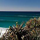 Ocean Swells, Cabarita NSW Australia by MikeBJ