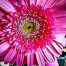 Flower 298 by Sherri Fink