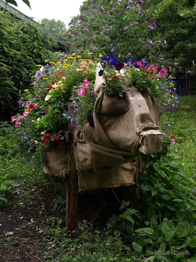 A Pig Full of Flowers - St Werburghs City Farm - No.1 by David Sandilands